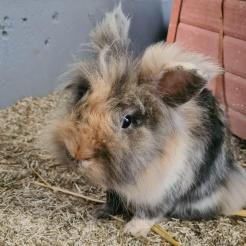 Kaninchen Rambo