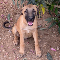 Hund Kaya