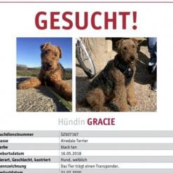 Hund Grace