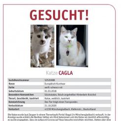 Katze Cagla