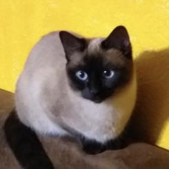 Katze Momo