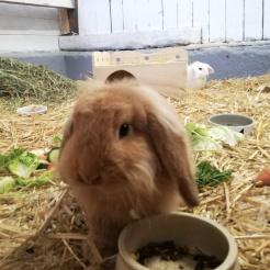 Kaninchen Rucola