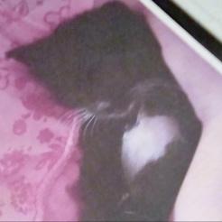 Katze Sara