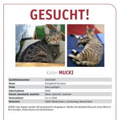 Katze Mucki
