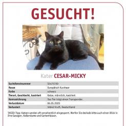 Katze Cesar-Micky