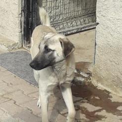 Hund Balou