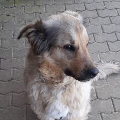 Hund Mira