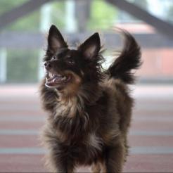 Hund Zoe