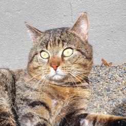 Katze Robert