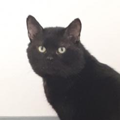 Katze John