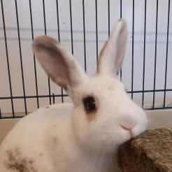 Kaninchen Hilde