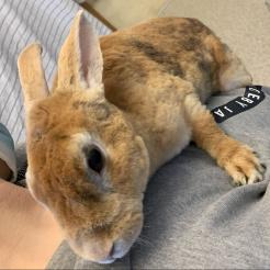 Kaninchen Marlene