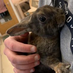 Kaninchen Max