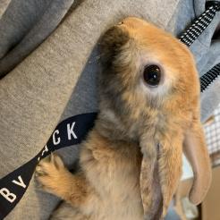 Kaninchen Milos