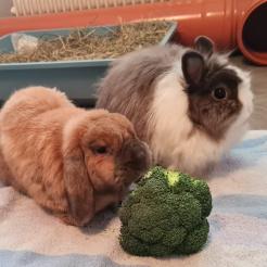Kaninchen Finn und Fräulein Flauschig
