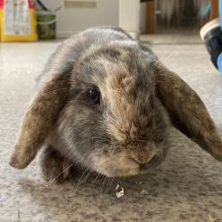 Kaninchen Fundkaninchen Siershahn (Feline)