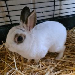 Kaninchen J.P.