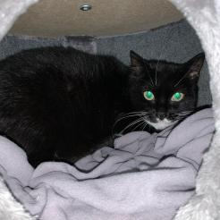 Katze Irena
