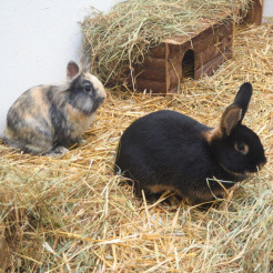 Kaninchen Lo(h)rena & Lorenzo