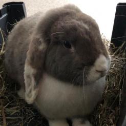 Kaninchen Balduin