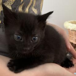 Katze Dominik