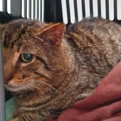 Katze Fundkater Kleinmaischeid