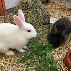 Kaninchen Alice & Hutmacher