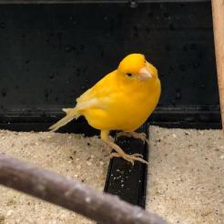 Vogel Else