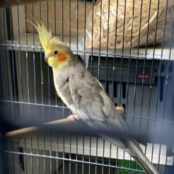 Vogel Gustav