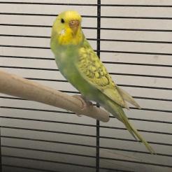 Vogel Fundvogel Kundert