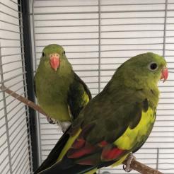 Vogel Jonas und Nancy