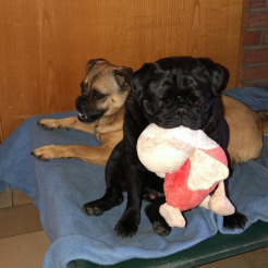 Hund Dora und Hugo