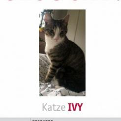Profilbild von Ivy