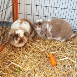 Kaninchen Fussel & Schlappohr