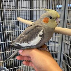 Vogel Fundvogel aus NR-Heimbach
