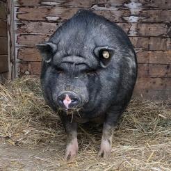 Weitere Bacon