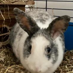 Kaninchen Bagira