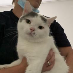 Katze Migun