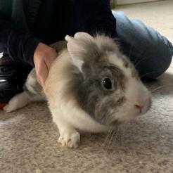 Kaninchen Strolch