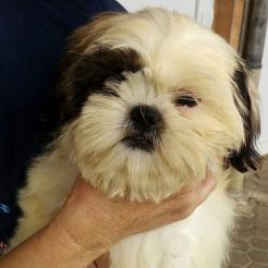 Hund Pixie