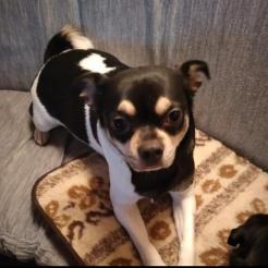 Hund Charly und Bella