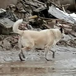 Profilbild von Hund in Ahrweiler gesichtet