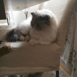 Profilbild von Kitty und Pascha