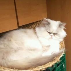 Profilbild von Pascha und Kitty