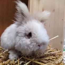 Kaninchen Bobby
