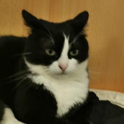 Profilbild von Vermisste Katze Altenahr