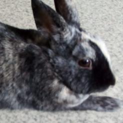 Kaninchen Mucki