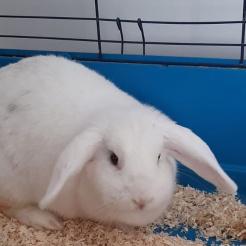 Kaninchen Luna