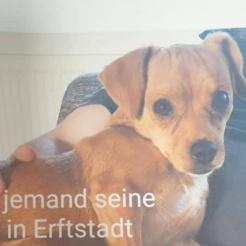 Profilbild von Hündin in Erftstadt Liblar zugelaufen