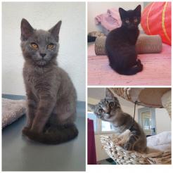 Katze Pauline, Maya, Jana